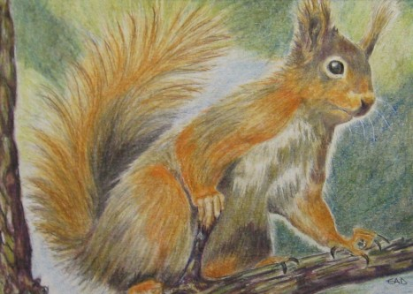 red squirrel painting