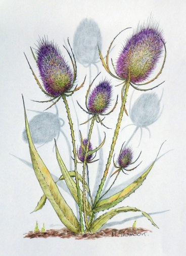 painting thistles