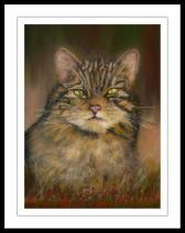 Wildcat artwork