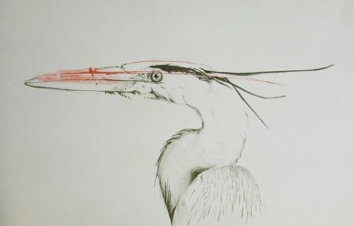 Heron drawing using a printed feather