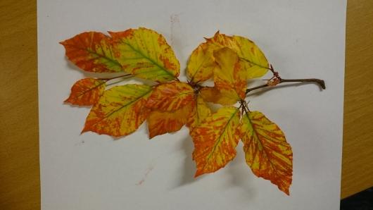 leaves lesson