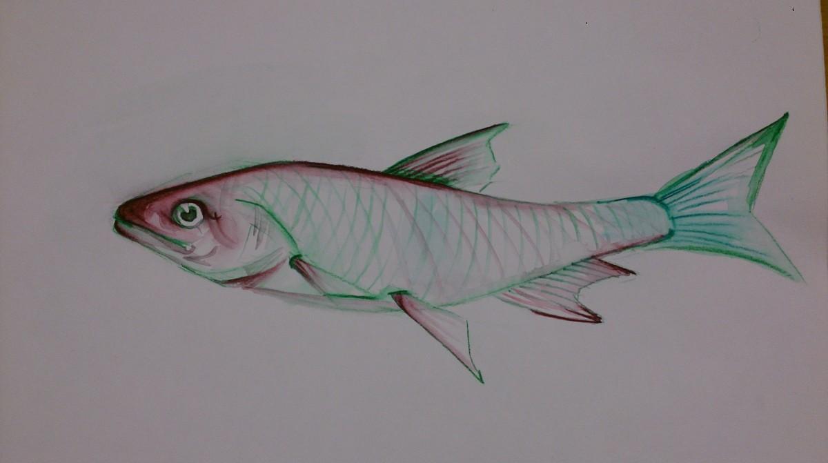 watercolour pencils fish