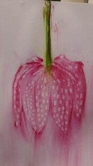 watercolour pencils flower masking