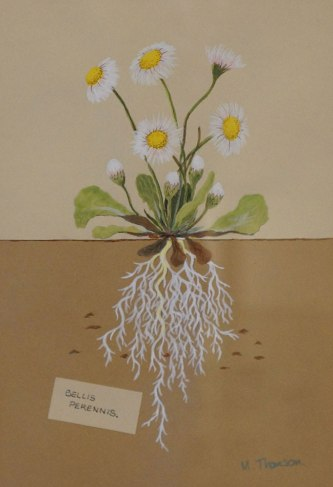 Daisy Roots by Morven Thomson painting