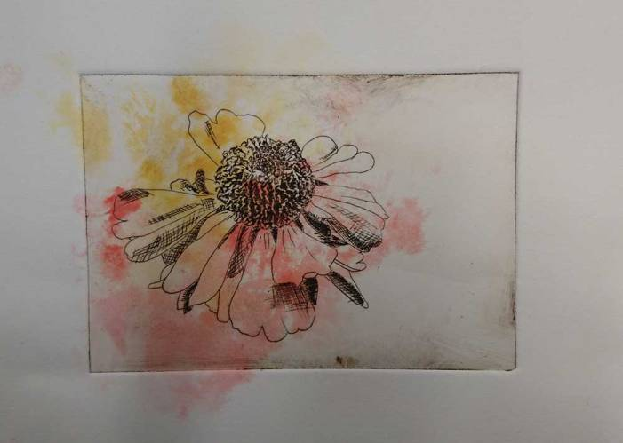 a black line etching of a flower with pink and yellow blotches